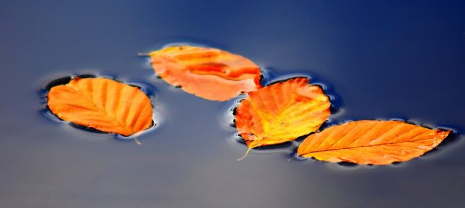 Teichpflege im Herbst